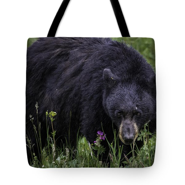 Bear Gaze Tote Bag