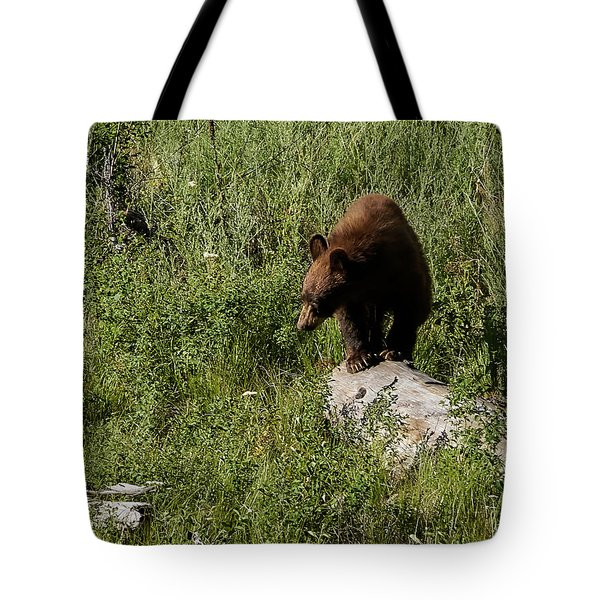 Bear1 Tote Bag by Loni Collins