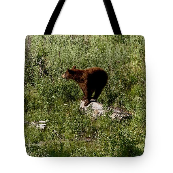 Bear2 Tote Bag by Loni Collins