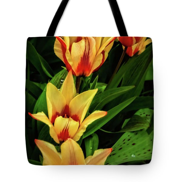 Tote Bag featuring the photograph Beautiful Bicolor Tulips by Robert Bales