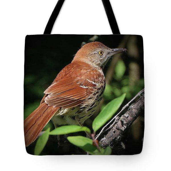 Beautiful Brown Thrasher Tote Bag