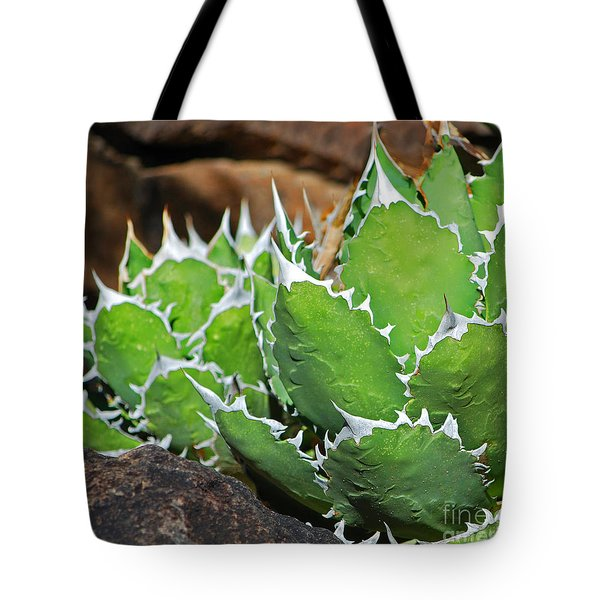 Beautiful Cactus Tote Bag by Donna Greene
