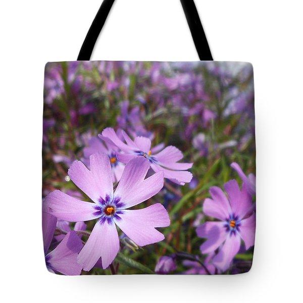 Beautiful Creeping Purple Phlox Tote Bag