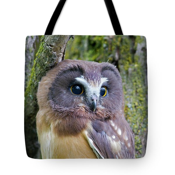 Beautiful Eyes Of A Saw-whet Owl Chick Tote Bag