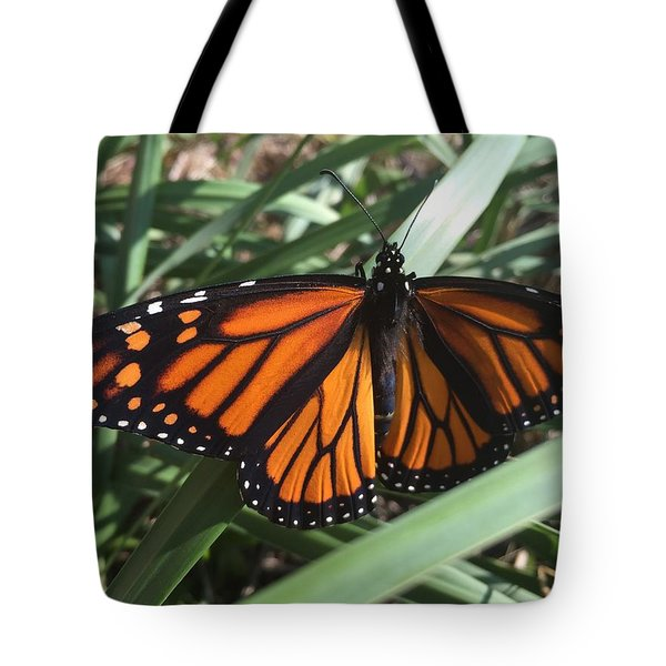 Tote Bag featuring the photograph Beautiful Fall Butterfly  by Paula Brown