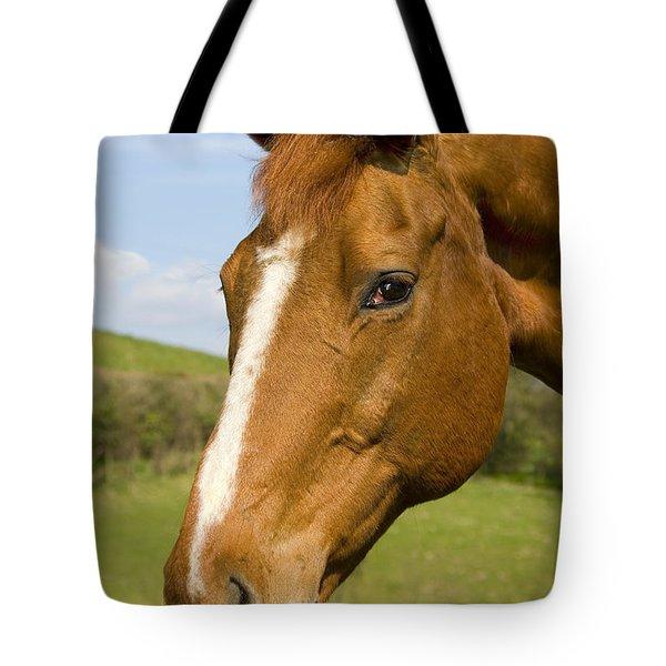 Beautiful Horse Portrait Tote Bag by Meirion Matthias