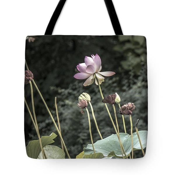 Beautiful Indian Lotus Tote Bag by Odon Czintos