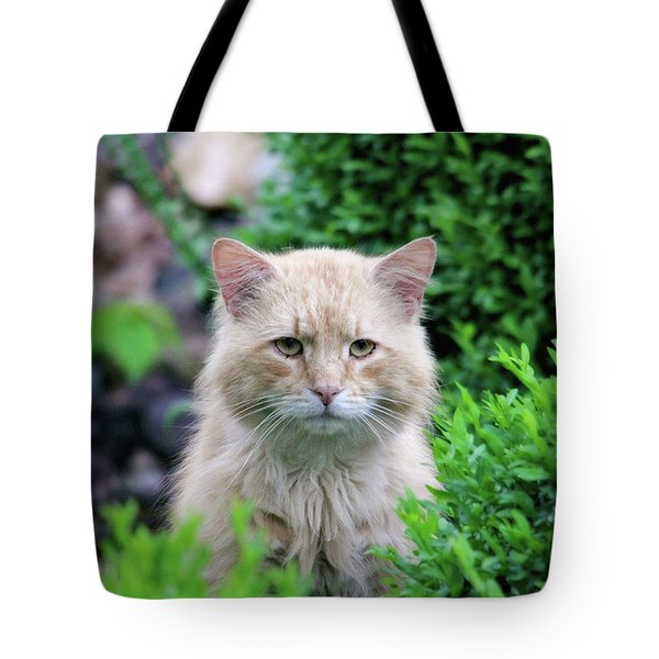 Tote Bag featuring the photograph Beautiful Kitty by Trina Ansel