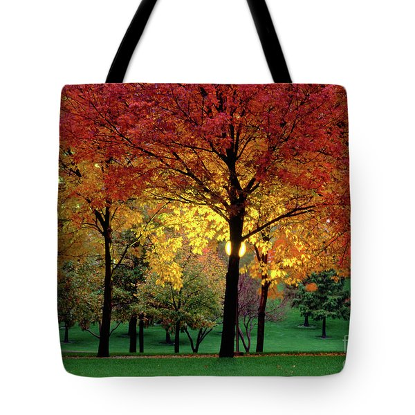 Beautiful Light At The Park In St. Louis In Autumn Tote Bag