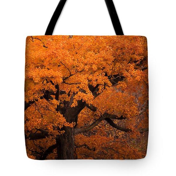 Beautiful Orange Tree On A Fall Day Tote Bag