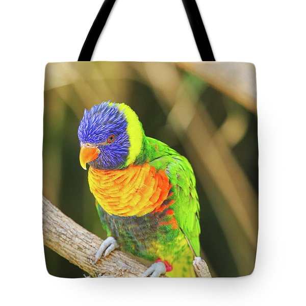 Beautiful Perched Mccaw On A Branch. Tote Bag