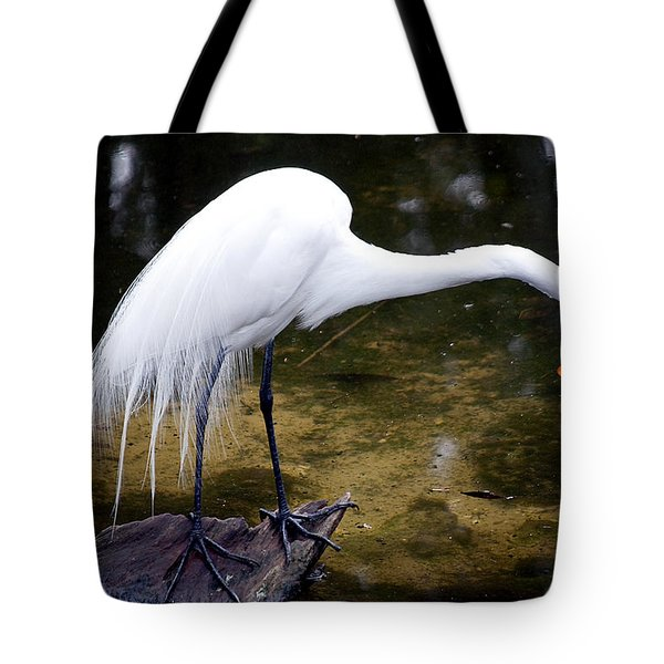 Beautiful Plumage Tote Bag