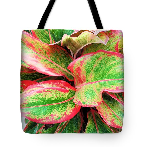 Tote Bag featuring the photograph Beautiful Red Aglaonema by Ray Shrewsberry