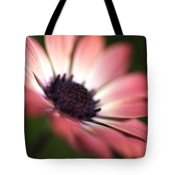 Beautiful Rich African Daisy Zion Red Flower Tote Bag
