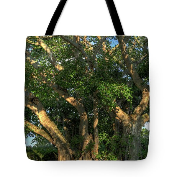 Tote Bag featuring the photograph Beauty And The Banyon by Donna Kennedy