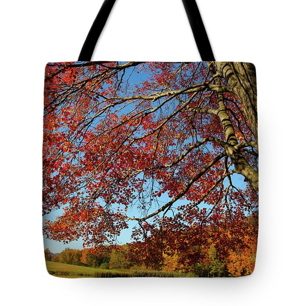 Tote Bag featuring the photograph Beauty Of Fall by Karol Livote