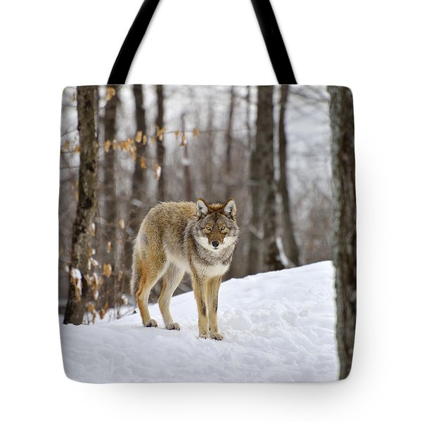 Beauty Of The Woods Tote Bag