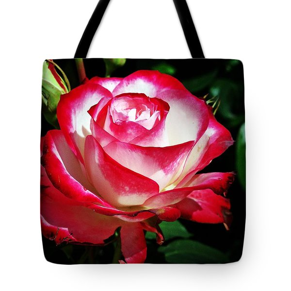 Tote Bag featuring the photograph Beauty Rose by Joseph Frank Baraba