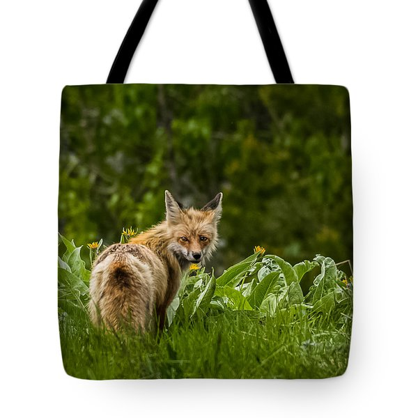 Tote Bag featuring the photograph Beaver Creek Mama Fox In Spring by Yeates Photography