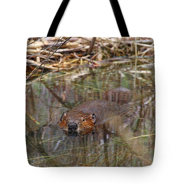 Beaver Look Tote Bag