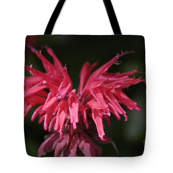 Bee Balm Tote Bag by Randy Bodkins