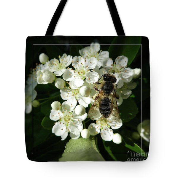 Bee On White Flowers 2 Tote Bag by Jean Bernard Roussilhe