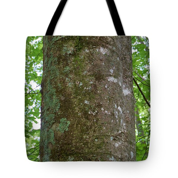 Beech Bark Tote Bag
