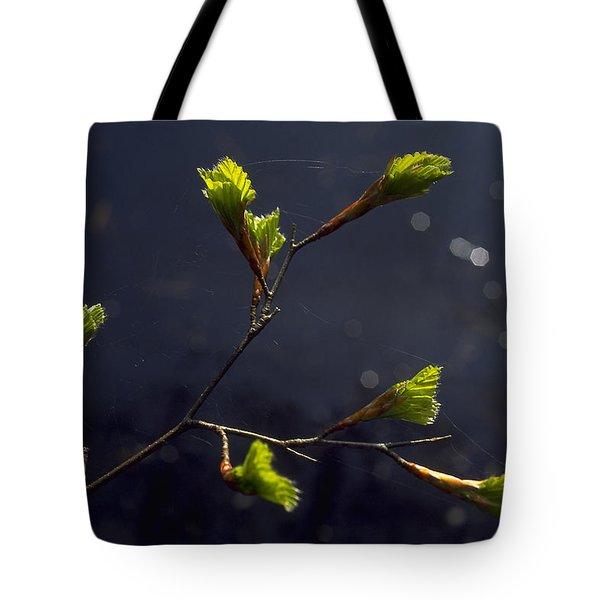 Beech Buds Tote Bag by Michael Mogensen