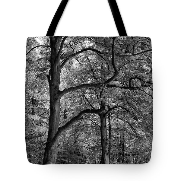 Beech Forest - 365-222 Tote Bag