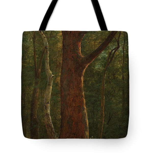 Beech Tree Tote Bag
