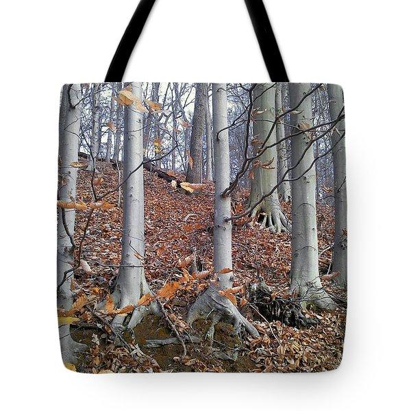 Beech Trees Tote Bag