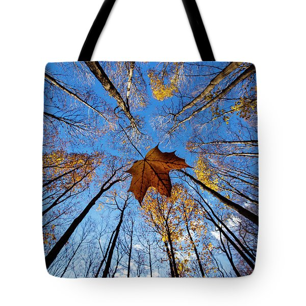 Tote Bag featuring the photograph Before The First Snow by Mircea Costina Photography