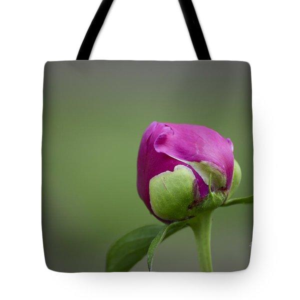 Simple Beginnings Tote Bag