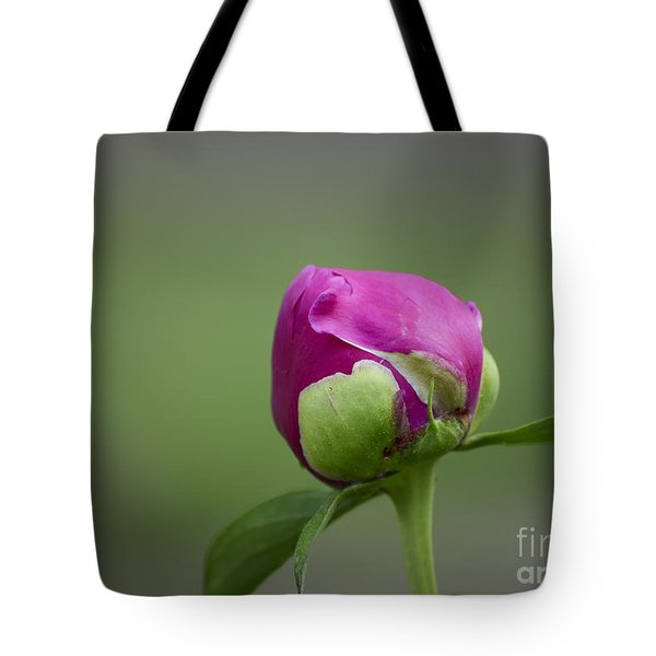 Simple Beginnings Tote Bag by Andrea Silies
