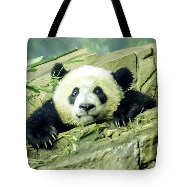Bei Bei Panda At One Year Old Tote Bag