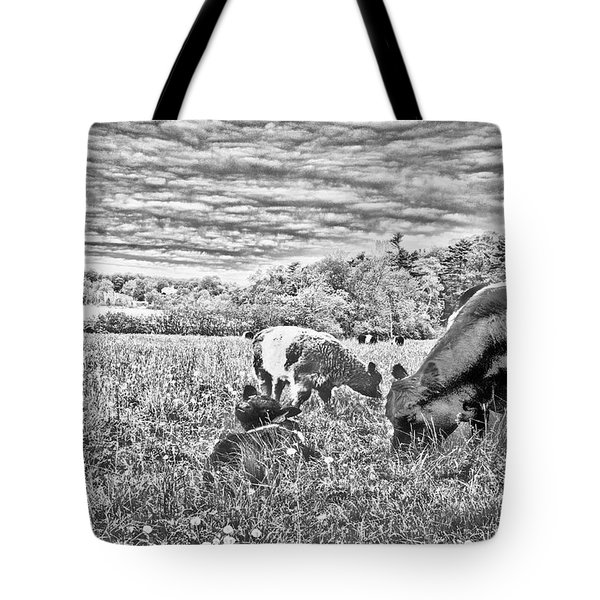 Belted Galloway Beef Cattle Tote Bag by Daniel Hebard