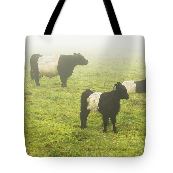 Belted Galloway Cows Grazing  In Foggy Farm Field Maine Tote Bag