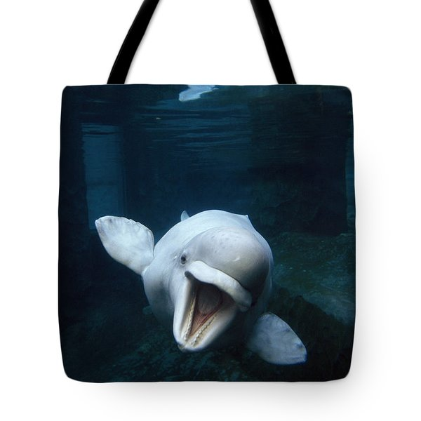 Beluga Whale Swimming With An Open Tote Bag