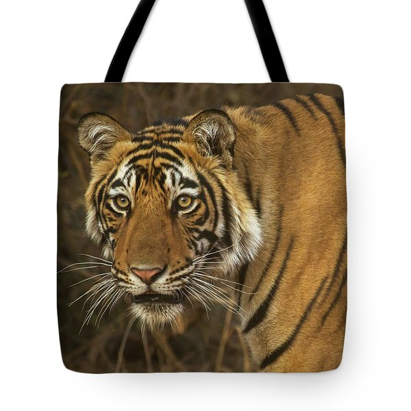 Bengale Tiger Tote Bag