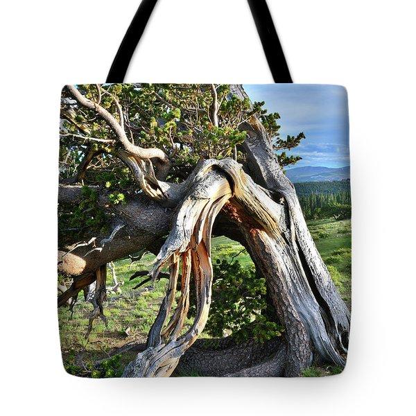 Bent Bristlecone Tote Bag