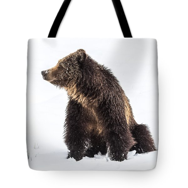 Tote Bag featuring the photograph Beryl Springs Grizzly Sow In Snow by Yeates Photography