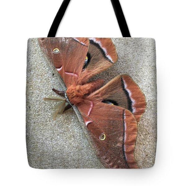Big Beautiful Silk Moth Tote Bag