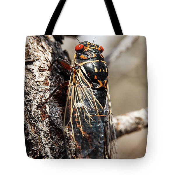 Tote Bag featuring the photograph Big Bend Periodic Cicada by Lon Dittrick