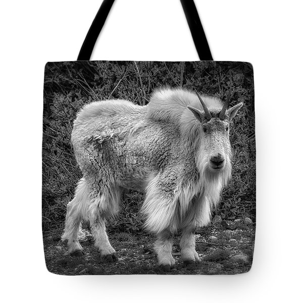 Tote Bag featuring the photograph Big Billy by Bitter Buffalo Photography