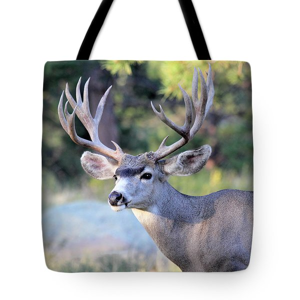 Big Buck Tote Bag