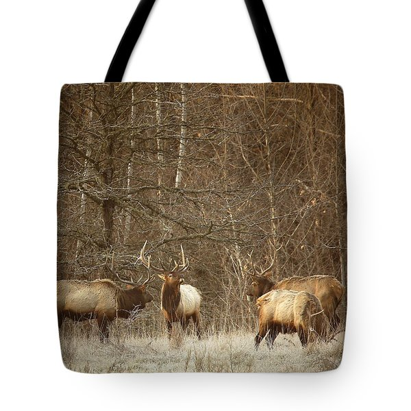 Tote Bag featuring the photograph Big Bull Meeting In Boxley Valley by Michael Dougherty