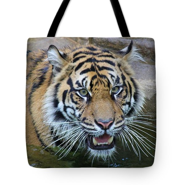 Tote Bag featuring the photograph Big Cat by Elizabeth Budd