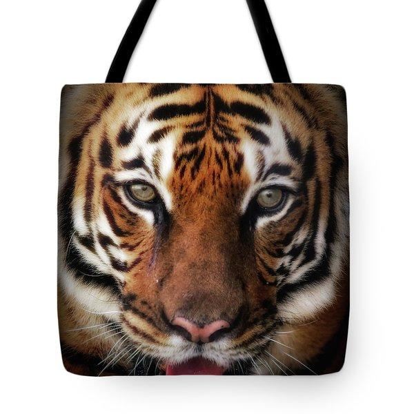 Big Cat Stare Down Tote Bag