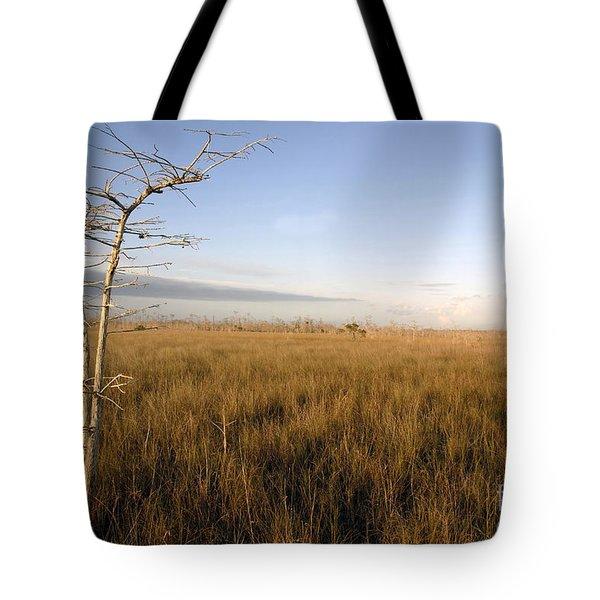 Big Cypress Tote Bag by David Lee Thompson