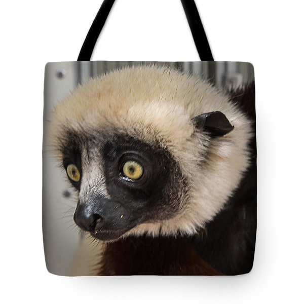 A Very Curious Sifaka Tote Bag